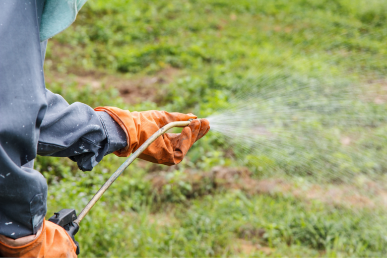 Person spraying herbicide in a field.